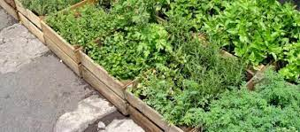 how to create a raised bed herb garden