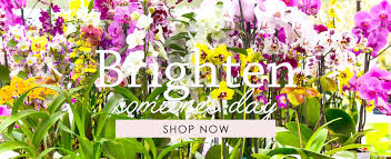 flower delivery in glendale ca