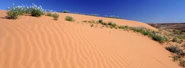 munga thirri simpson desert conservation park and regional reserve national parks south australia