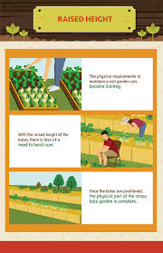 straw bale gardening raises the height of the plants