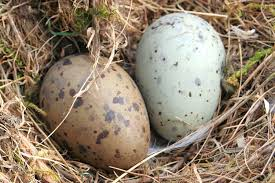 Small Light Blue Speckled Eggs Photos Of Wild Bird Nests And Eggs