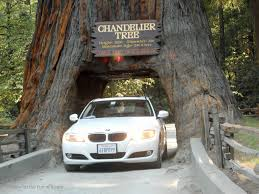 drive through redwood chandelier tree