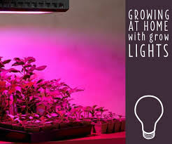 Lighting for houseplants Cool Grow Lights For Indoor Plants Getting Started Lamps Plus Grow Lights For Indoor Plants Getting Started Ideas Advice