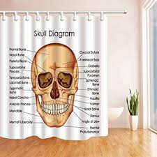 Shower Curtain Size Chart Amazon Com Rrfwq Skull Diagram Shower Curtains For Bathroom