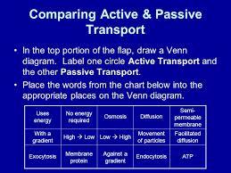 Active Vs Passive Transport Venn Diagram Active And Passive Transport Venn Diagram Under Fontanacountryinn Com