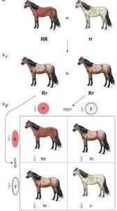 Brindle Color Chart Pin By Haily Bohse On Animal Sciences And Veterinary Care