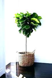 tall indoor plant pots large indoor plant pots best images about modern indoor large indoor indoor tall indoor plant