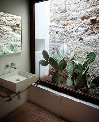 Indoor Desert Plant In Bathroom
