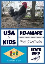 Small Picture Delaware State Bird USA for Kids