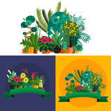 indoor home office plants royalty.  royalty illustration of houseplants indoor and office plants in pot royalty free  stock image on indoor home office plants
