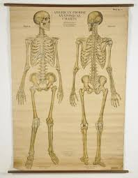 American Frohse Anatomical Charts Key Large 1918 American Frohse Anatomical Chart Of Human Apr