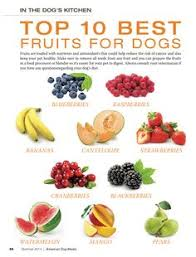 Dog Safe Food Chart Ideas What To Feed Your Dog Dogs Dog