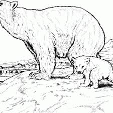 Small Picture Printable Polar Bear Coloring Pages For Kids Pages adult
