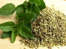 35 scientifically health benefits of oregano leaves beauty cal treatments dr n