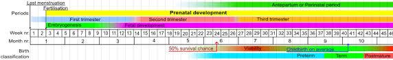 Prenatal Development Wikipedia