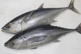 Image result for kandungan vitamin d pada ikan tongkol