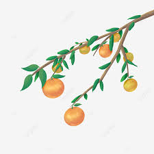 harvest fruit orange fruit tree autumn