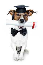Image result for dog training pictures