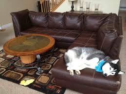 repairing leather couch doberman forum breed dog forums