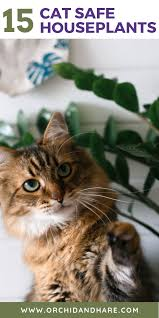 Cats and coffee grounds don't mix the reason coffee grounds repel cats is simply that cats don't like the smell. 15 Low Maintenance Plants That Are Safe For Cats 2021 Cat Friendly Plants Cat Safe Plants Dog Safe Plants