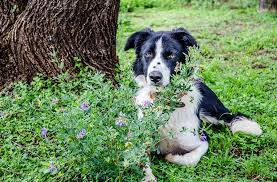 foods plants that are toxic to dogs