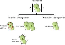 Principles Of Electroporation For Gene Therapy Springerlink