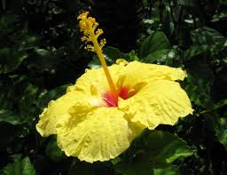 Image result for beach flowers