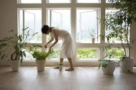 plants feng shui home layout plants. Plants Feng Shui Home Layout E