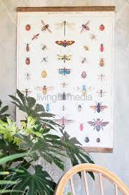 Vintage Wall Chart Vintage Wall Chart With Illustrations Of Buy Image