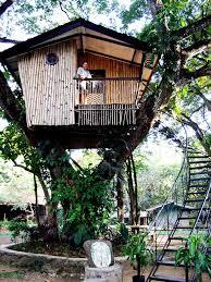 Free Tree House Building Plans Modern Magic Building A Treehouse Treehouse For Free
