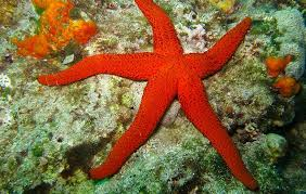 Starfish Facts For Kids National Geographic Kids