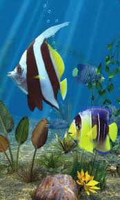 live moving wallpaper for android. Wonderful Wallpaper Aquarium 3D Fish Live Wallpaper Screenshot 12 Inside Moving For Android