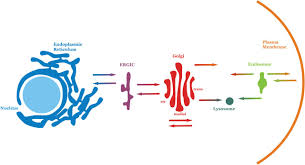 biological membranes essays in biochemistry how membranes are made