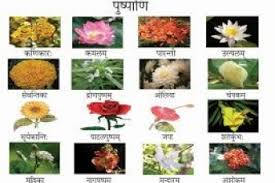 types of flowers with names and meanings. types of flowers with names and meanings