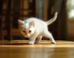 Image result for prowling kitten