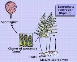 Venn Diagram Of Vascular And Nonvascular Plants Biological Diversity 5