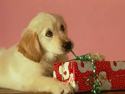 cute merry christmas wallpaper dogs. Plain Dogs Cute Merry Christmas   Dogs S On Wallpaper
