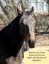horse sympathy card with e