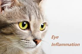 eye drops used to relieve eye pain and
