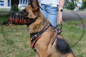 decorated with fire flames leather dog harness
