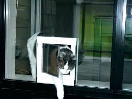 extra large dog doors for walls thru the wall dog doors through wall dog door sliding glass
