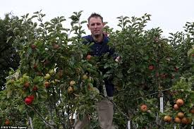 Business Decrease And Profit Reduction As A Group Of Fruit Trees How To Graph A Fruit Tree