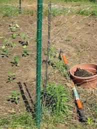 Chicken Wire Garden Fence Chicken Wire Fence Gate Small Garden Fence