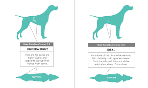 Obesity In Dogs Overweight In Dogs Weight Loss For Obese