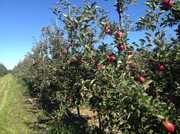 3 Things To Know About Hardiness Zones  Stark Brou0027sWhat Fruit Trees Grow In Michigan
