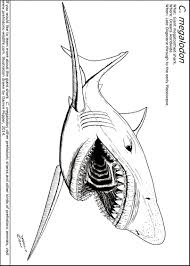 Small Picture Coloring Pages Animals Whale Shark Coloring Page Shark Coloring