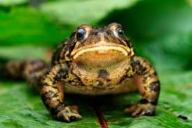 garden frogs.  Garden Intended Garden Frogs M