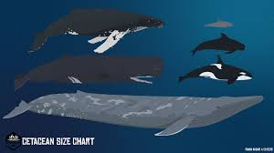 Whales By Size Chart Artstation Cetacean Size Chart Fahim Akbar