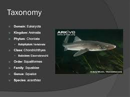 dogfish shark dissection ppt video online  2 taxonomy