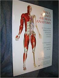 Wall Chart Of Human Anatomy Wallchart Of Human Anatomy 3 D Full Body Images Detailed